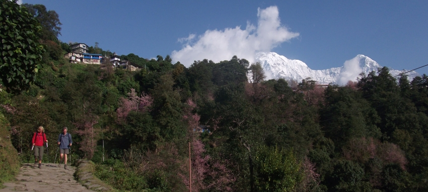 Annapurna South from Ghandruk
