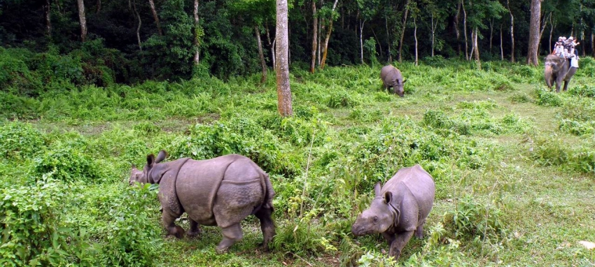 Jungle Safari in Bardiya