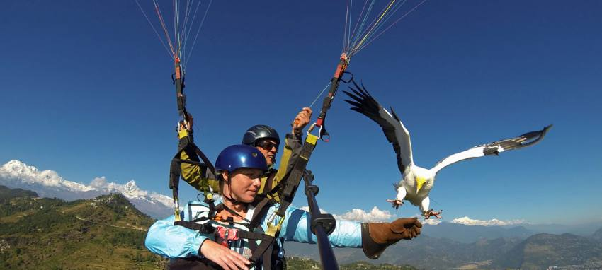 Paragliding and Parahawking