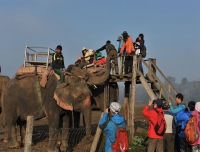 Elephant ride at Chitwan