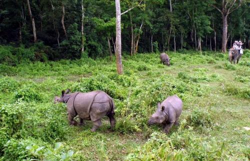 Jungle Safari in Bardiya